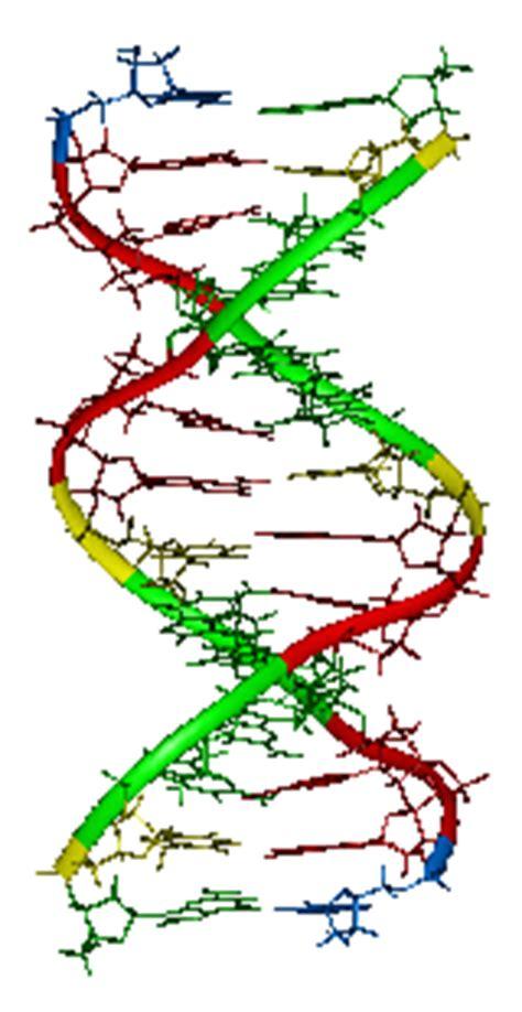 Genetic Engineering - Term Paper
